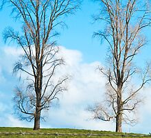 twin trees by Anne Scantlebury