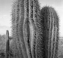 Splitting Saguaro by James2001
