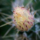 Cactus Flower by cs-cookie