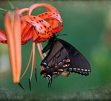 Black Swallowtail Butterfly with Tiger Lily by Eileen McVey