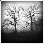Trees, Fog and Graveyard by Maria Schlossberg