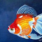 Ryukin Goldfish by Robert David Gellion