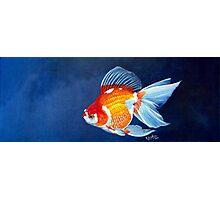 Ryukin Goldfish Photographic Print