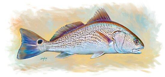 Redfish Illustration, Red Drum by Mike Savlen