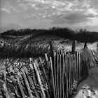 Dune Fence at Sandy Hook by Debra Fedchin