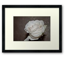 Purity In A White Rose Framed Print