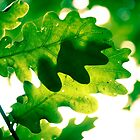 Leaves of Green by photografixdesi