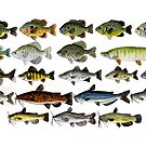 Fish Group w/ white background by fishfolkart