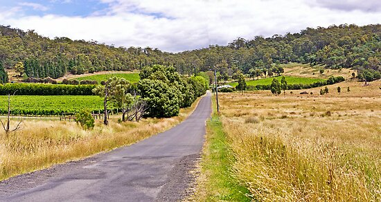 Road to Freycinet Vineyard by TonyCrehan