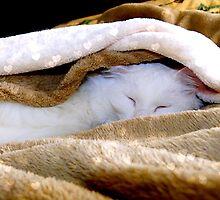 Sleeping under the warm blanket by Scott Mitchell