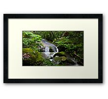 Lane Cove National Park Framed Print