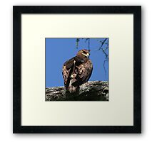 Eagle Eyed Framed Print
