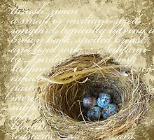 Bird's Nest with Blue Eggs  by Jeweledfrog