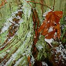 Snow In The Rainforest by Elaine Bawden
