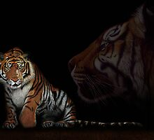 Tiger - colored pencil - drawing by Monika Juengling