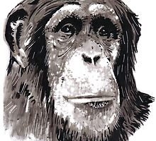 Portrait of a Chimpanzee. by Darren Golding