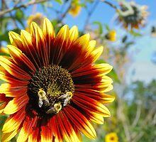 bees at work by Jim  Hughes