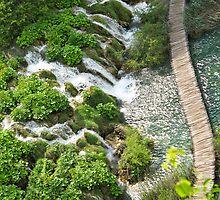 walkway at Plitvice Lakes by Anne Scantlebury