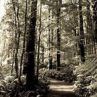 Rainforest Walk by photografixdesi