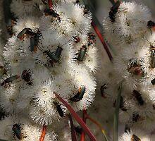 Busy Bugs by yolanda