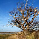 Old Gnarled Tree of Prominence by hootonles