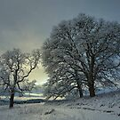 Snow and Light by Charles &amp; Patricia   Harkins ~ Picture Oregon