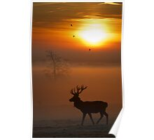 Stag sunrise 2 Poster