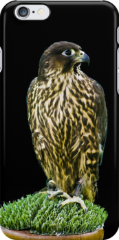 Hawk iPhone Case by Country  Pursuits