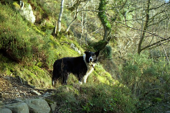 Indy, King of the woods. by Michael Haslam