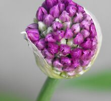 About To Burst! by Tracy Faught