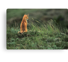 Alone but not Lonely, Fox photo by Donna Ridgway Canvas Print