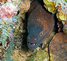 Yellow Margin Moray Eel by eMichaelJames