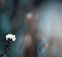 Feel the Blur by Evogance
