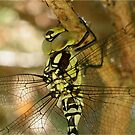 Close-up of Hawker Dragonfly by Rivendell7