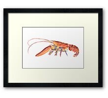 Northern Lobster (Homarus americanus) Framed Print