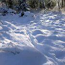 Deer Tracks in Fresh Snow by Elaine Bawden
