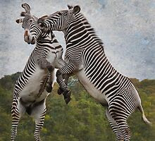 The Zebras Crossing !! by Sheila Laurens