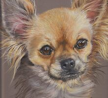 Chihuahua by Redbarron