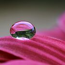 Water drop on flower... by gmws