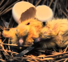 And Then the Eggs Turned Into Baby Pigeons…   by montserrat