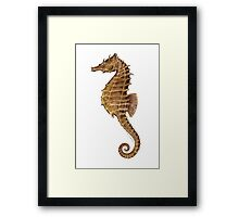 Northern Seahorse (Hippocampus hudsonius)  Framed Print