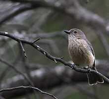 Little Brown Bird by Phillip Weyers