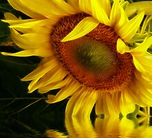 Bring Me The Sunflower by Pamela Phelps