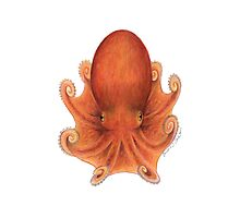 Northern Octopus (Eledone cirrhosa) Photographic Print