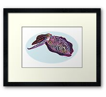 Common Cuttlefish (Sepia officinalis) Framed Print
