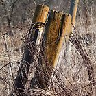 Fence Posts and Barbed Wire by Deb Fedeler