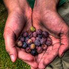 Berries by mijes