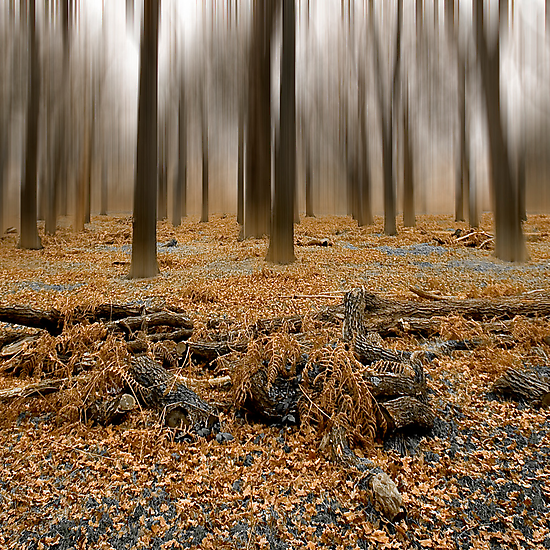Winter Trees Abstract by David Henderson