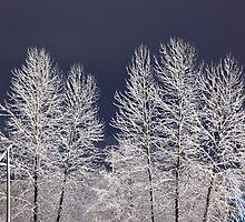 Frozen Nightscape by Jim Stiles