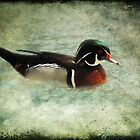 Carolina Duck by Carol Bleasdale